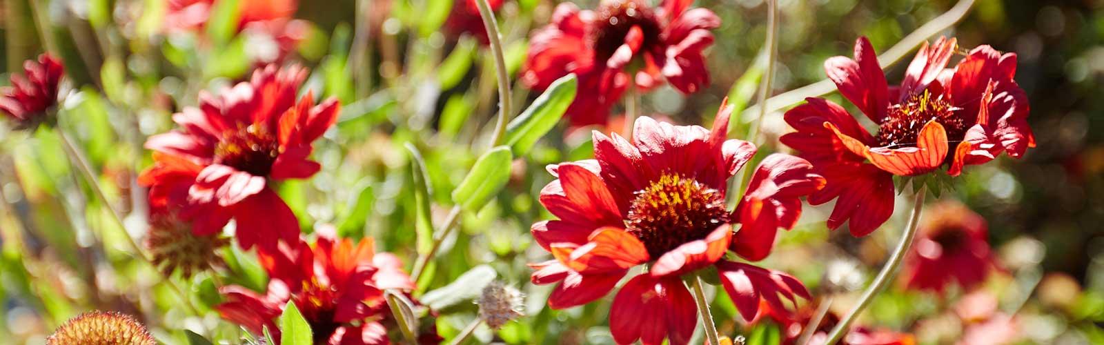 CAUE de la Vendée - un jardin plein de vie - publication