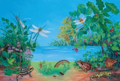 CAUE85 - La mare de mon village, affiche pédagogique.